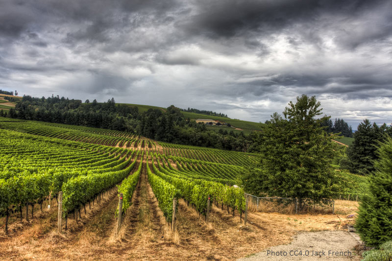 Oregon's Willamette Valley wine region