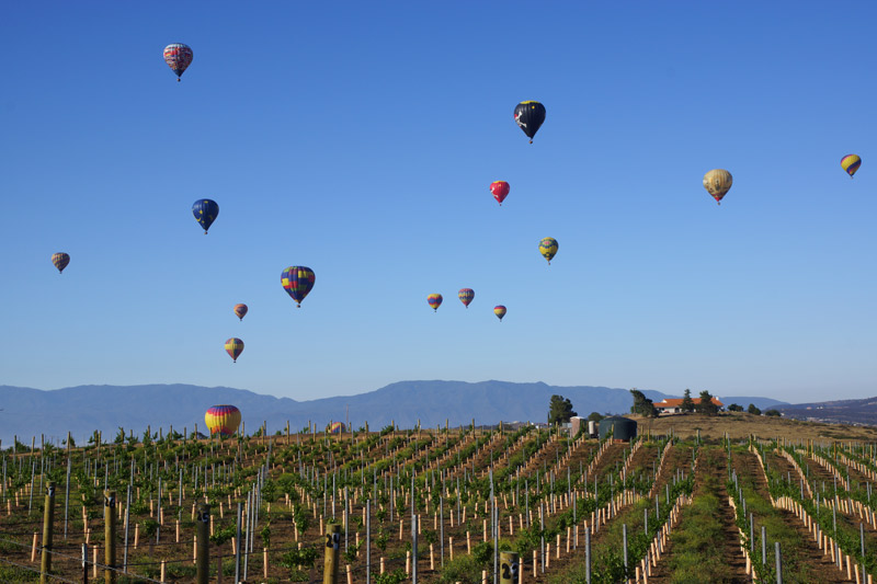 temecula wine region