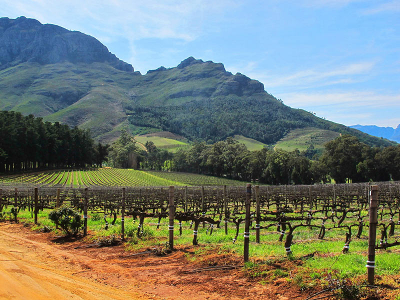 Stellenbosch offers incredible natural beauty, everywhere you look
