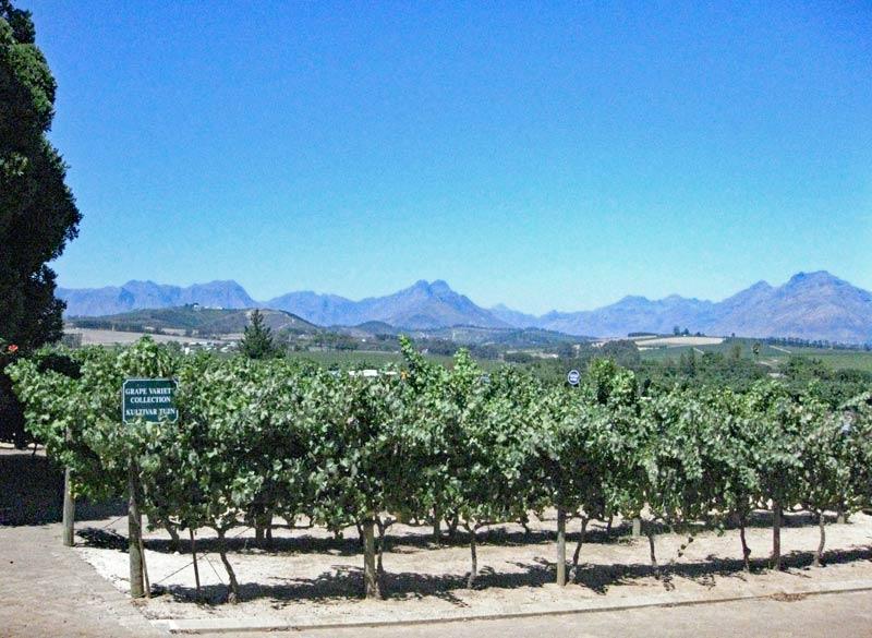 Discover Stellenbosch's beauty