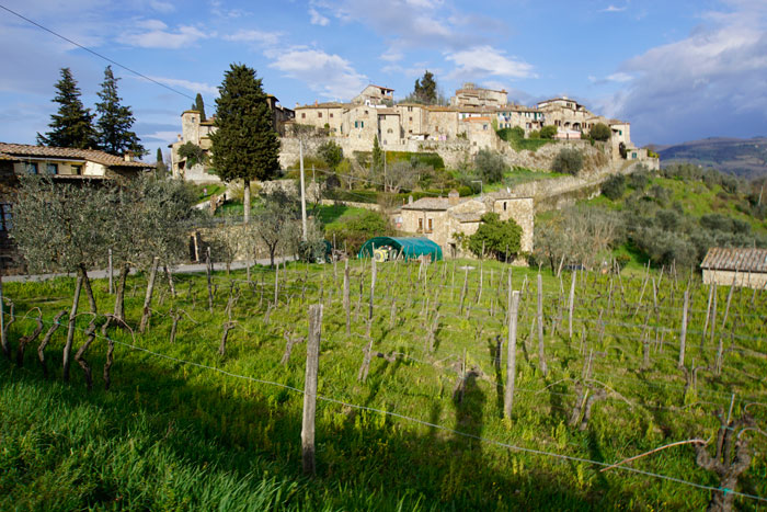 Montefioralle Winery near Greve in Chianti