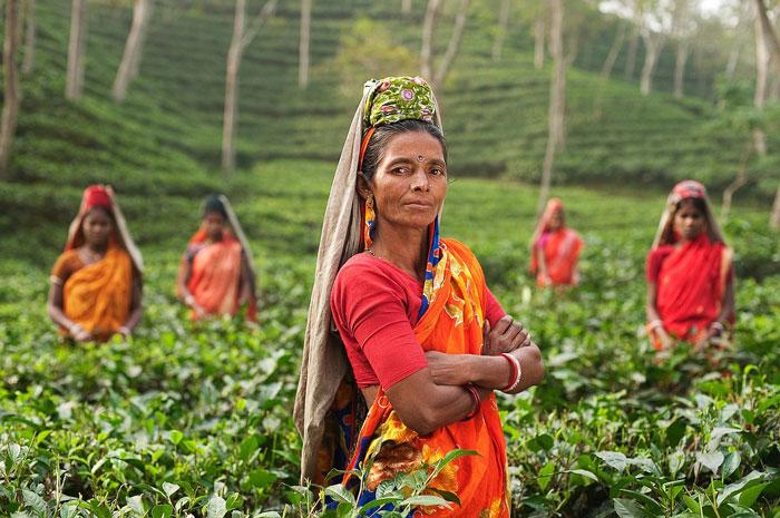 A tea plantation in India
