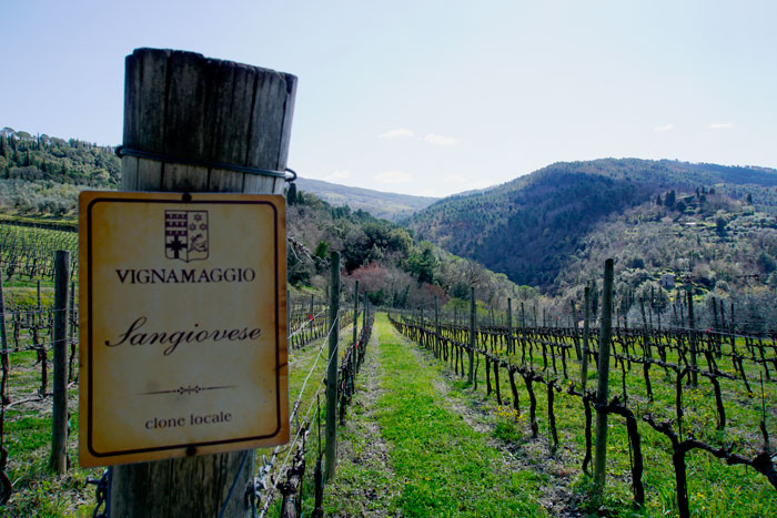Wineries of Tuscany
