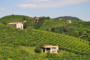 Where to find the best wineries in Italy