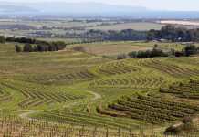 Australian wine region of McLaren Vale