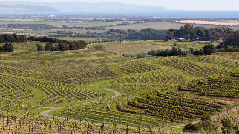 Australian wine region of McLaren Vale