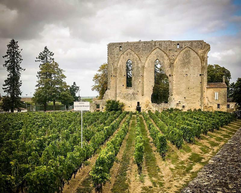 Saint-Emillion vineyard