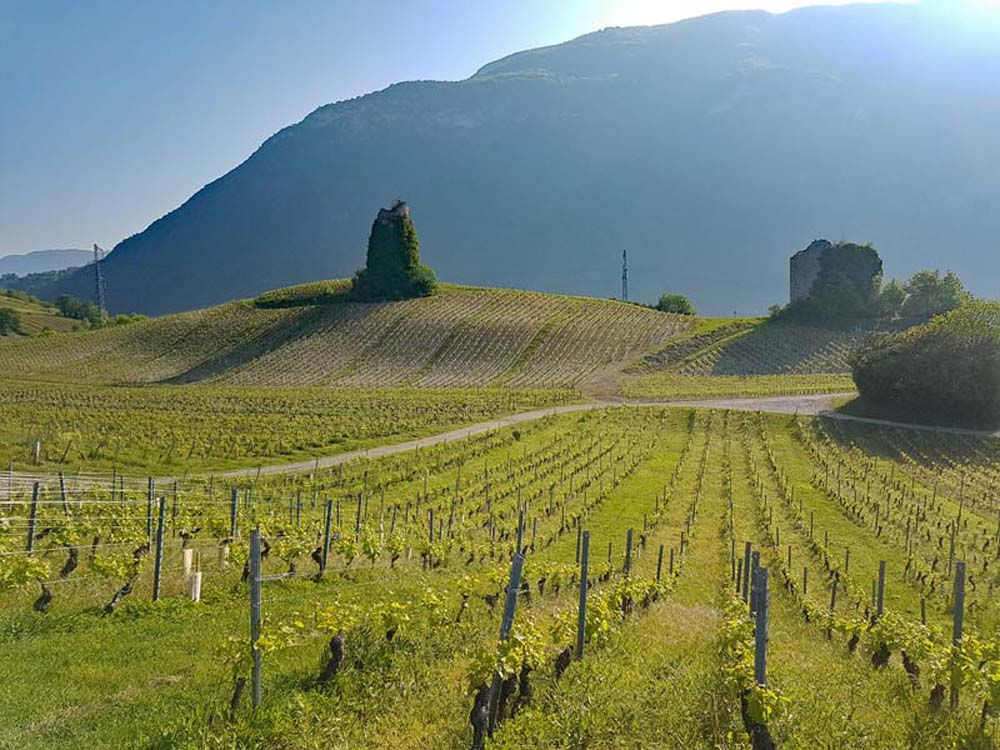 Savoie Wine Region in France